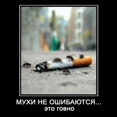 мухи не ошибаются